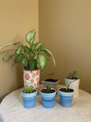 Assorted Indoor plants for Sale in Bothell, WA