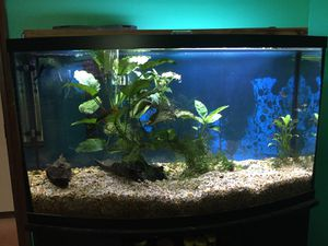 46 Gallon Bowfront Fish Tank for Sale in Newberg, OR