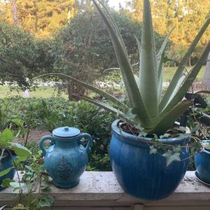 Set Of 4 Turquoise Colour Flower Pots With Cultured Plants for Sale in Newport Beach, CA