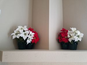 Faux Poinsettia Flowers (Red & White) for Sale in Costa Mesa, CA