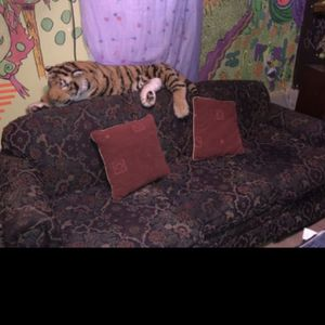 FREE FREE FREE Queen Size Pull out couch bed (no mattress included) for Sale in Stone Mountain, GA