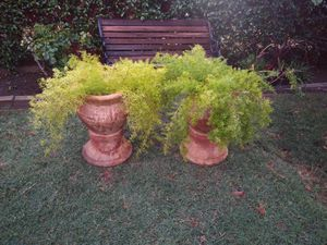 2 Pot with plants for Sale in Farmersville, CA