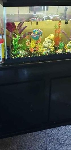 40 Gallon Fish Tank Set Up for Sale in Fremont,  CA