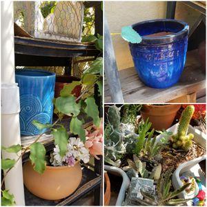Succulents & cacti & planters for Sale in Phoenix, AZ