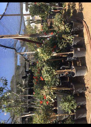 Plants (nursery) for Sale in Perris, CA