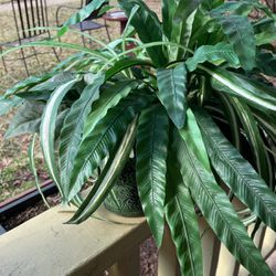 Fake Plant for Sale in Herndon,  VA