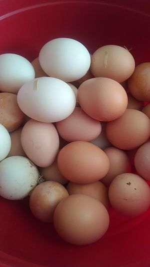 Duck and chicken eggs organics for Sale in Las Vegas, NV