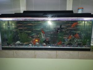 "Fish tank 55"" with two new air blower and the filter and everything inside for Sale in Dearborn, MI"