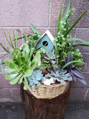 Succulents en canasta grande for Sale in Bell, CA