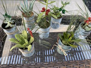 Succulent gifts for Sale in Temecula, CA