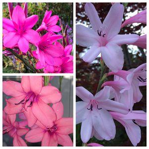 Plant sale Saturday 5/23 9AM - 2PM for Sale in Pleasant Hill, CA