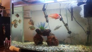 Selling aquarium for Sale in Oxon Hill, MD