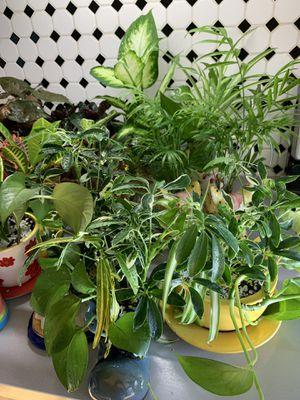 Assortment of plants arrangements. Please see description. for Sale in Denver, CO