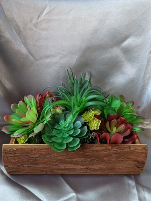 Succulent arrangement for Sale in Cleveland, OH