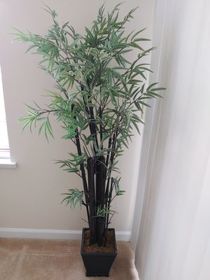 Bamboo tree decorative potted houseplant for Sale in Arlington, VA