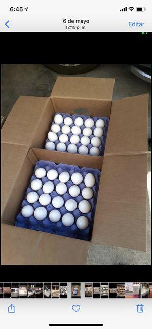 Huevos por caja puesto en su casa los traigo por encargos nadamas esque vine fresco la caja trae 180 huevos blancos extra large cafes mediano jumbo c for Sale in Burbank, CA