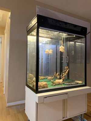 reptile, animal, pet cage. for Sale in Pembroke Pines, FL