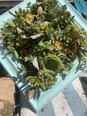 Succulent living garden framed art gift custom colors for Sale in Carlsbad, CA