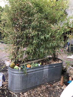 Bamboo black & golden in trough you haul very heavy for Sale in Portland, OR