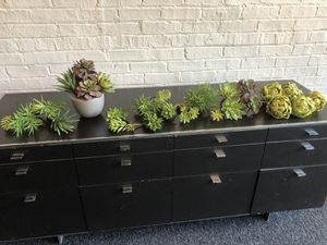 Succulent collection for Sale in Chicago, IL