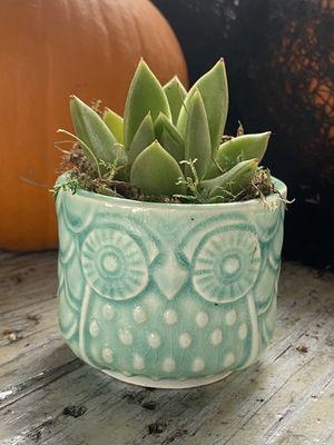 Sedum adolphi w/owl planter for Sale in Splendora, TX