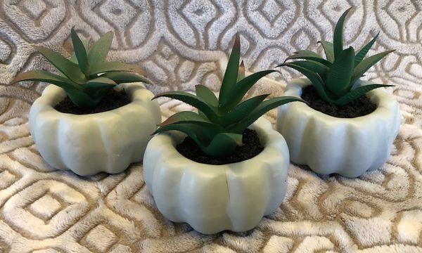 Succulent pumpkins (3)