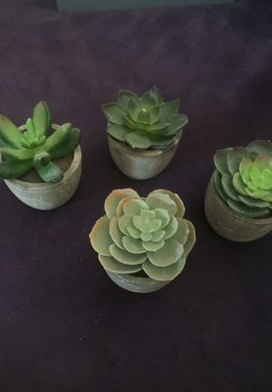 Succulents- plastic but look very real! for Sale in Huntington Beach, CA