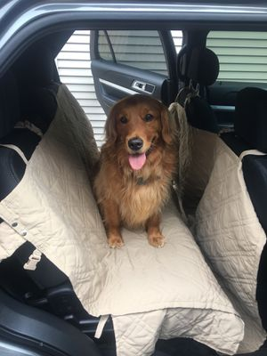 Dog Car seat cover for Sale in Grosse Pointe, MI