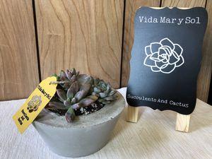 Small Succulent Arrangement for Sale in Pico Rivera, CA