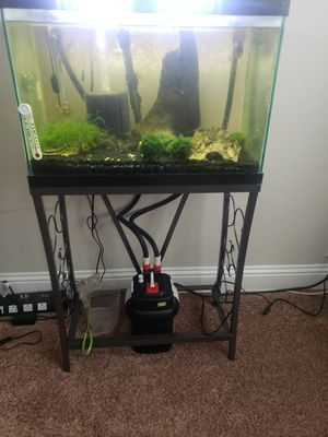 20 gal fish tank with fluval filter for Sale in Justin, TX