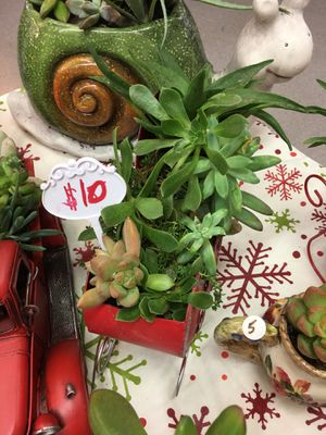Christmas succulent for Sale in Fresno, CA