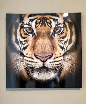 Tiger Wall Art for Sale in St. Louis, MO