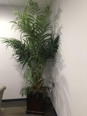 Plants for Sale in Orlando, FL