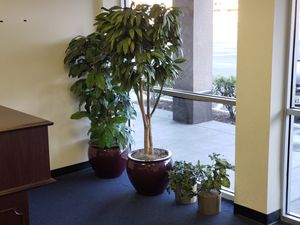 Fake Plants for Sale in Lake Forest, CA