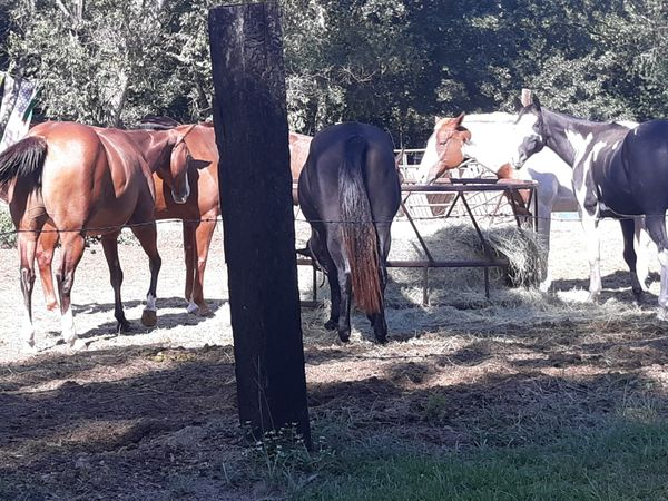 Near Horses: Lot for Sale!