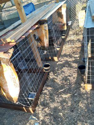 Pollitas for Sale in Grand Prairie, TX