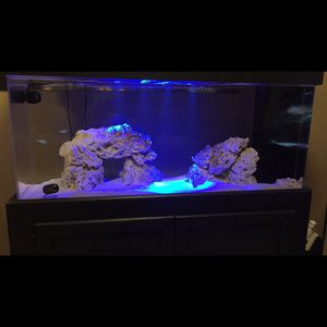 55 Gallon Saltwater Fish Tank for Sale in Daly City, CA