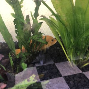 Fish Tank for Sale in Mount Hamilton, CA