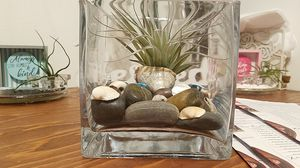 Live air plant holder for Sale in Buena Park, CA