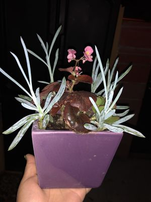 Beautiful flowers in a purple pot for Sale in Los Angeles, CA