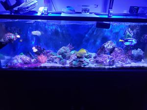 corals for Sale in Riverside, CA