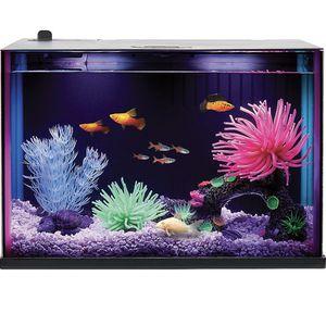 5 Gallon Fish Tank for Sale in Los Angeles, CA