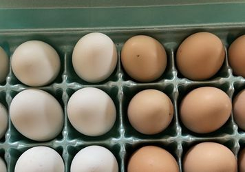 Fresh Farm Chicken Eggs for Sale in Henderson,  CO