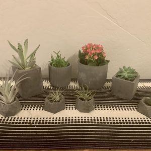 Handmade Concrete Modern Flower Pot for Sale in Gilbert, AZ