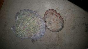 Shells for Sale in Wenatchee, WA