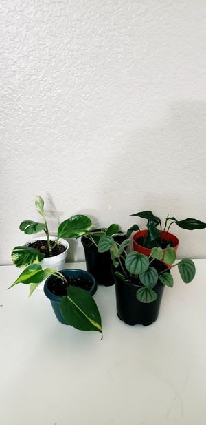 Live houseplants for Sale in Chandler, AZ