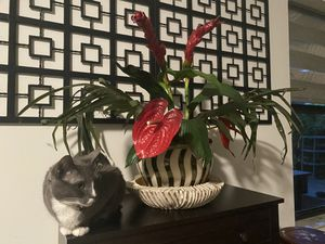 Flower Arrangement and Vase for Sale in Miami, FL