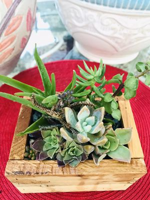 Succulent Arrangement for Sale in Visalia, CA