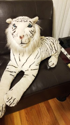 White tigers for Sale in Tracy, CA