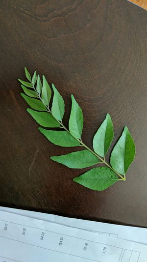 Freshly plucked curry plant leaves کڑھی پتا for Sale in Laurel, MD